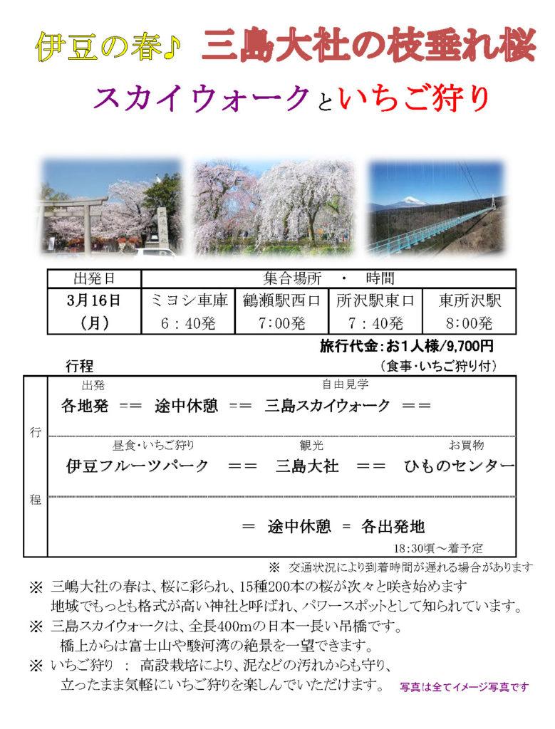 伊豆の春♪ 三島大社の枝垂れ桜 スカイウォークといちご狩り